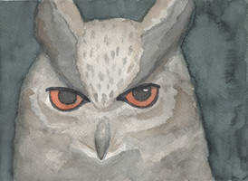 Watercolor owl by dragon-fire