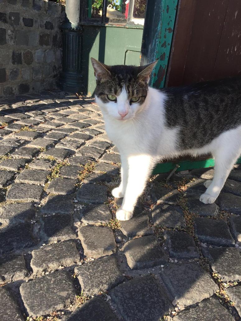 CAT by Jennifer1098