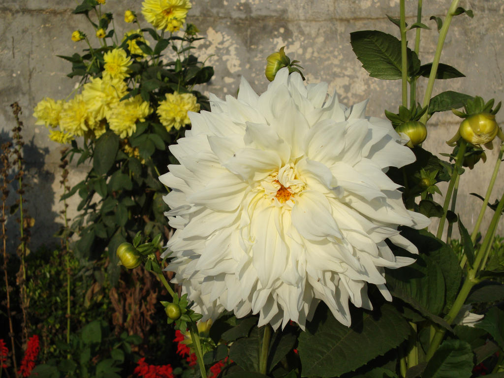 White Flowers Pictures And Names - comousar