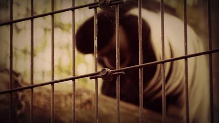 Caged. by Jaypawfan1