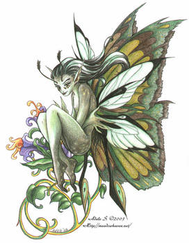 Moth Fae