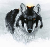 Staring at the wolf