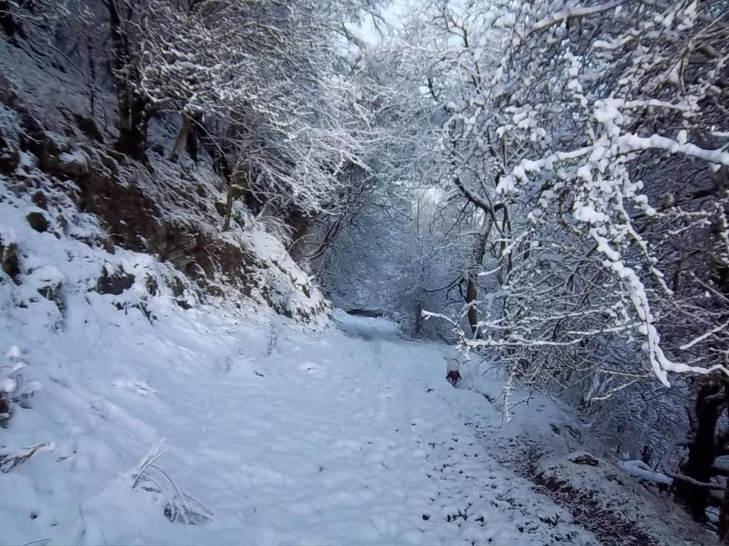 Winter wonderland by Azul-din