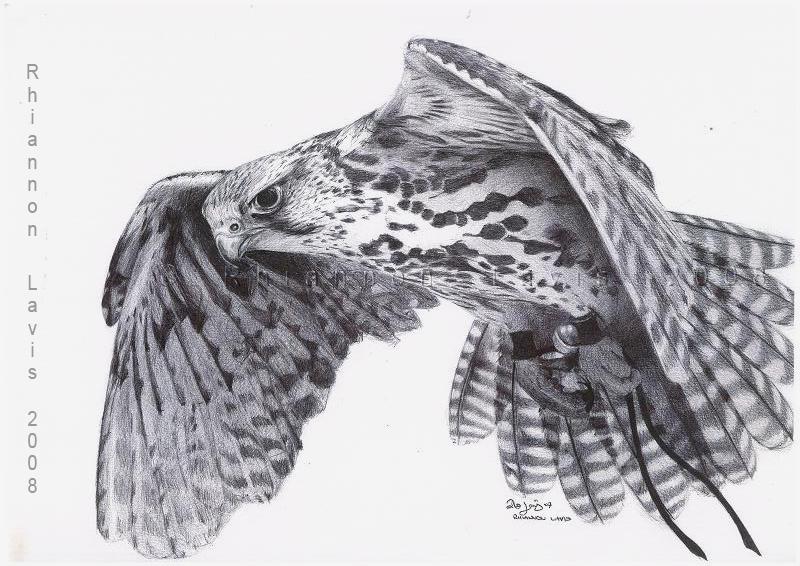 A Falcon named Hope by oddballoffun on DeviantArt White Falcon Bird Tattoo