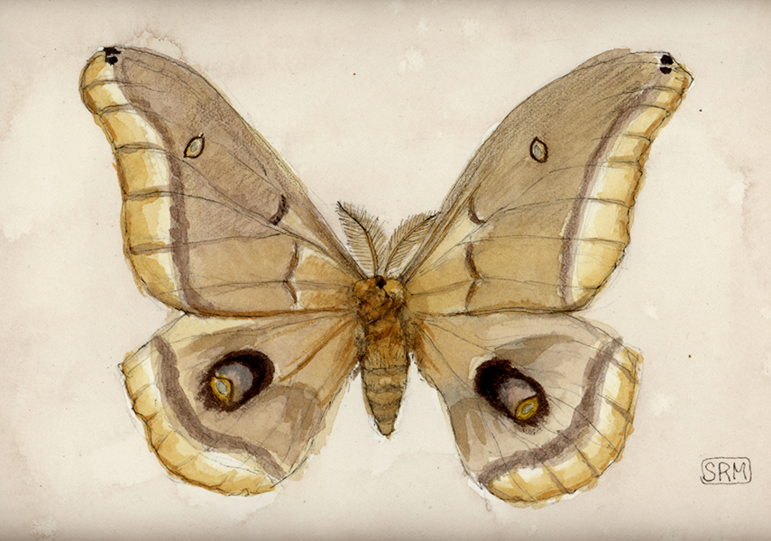 Moth by InsideOutNBackwards