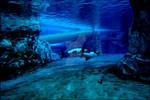 Underwater Portal