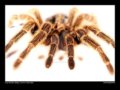 Arachnophobia by ivekvatrozic