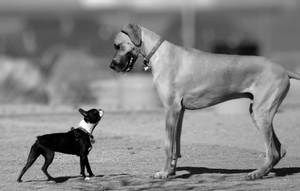 David and Goliath by Feeferlump
