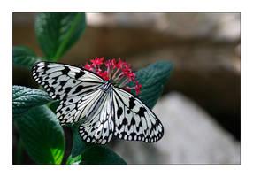 FMG Butterfly 1 by badman22
