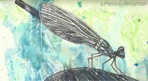 Dragonfly Rain