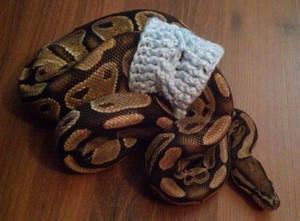 Ike's Sweater