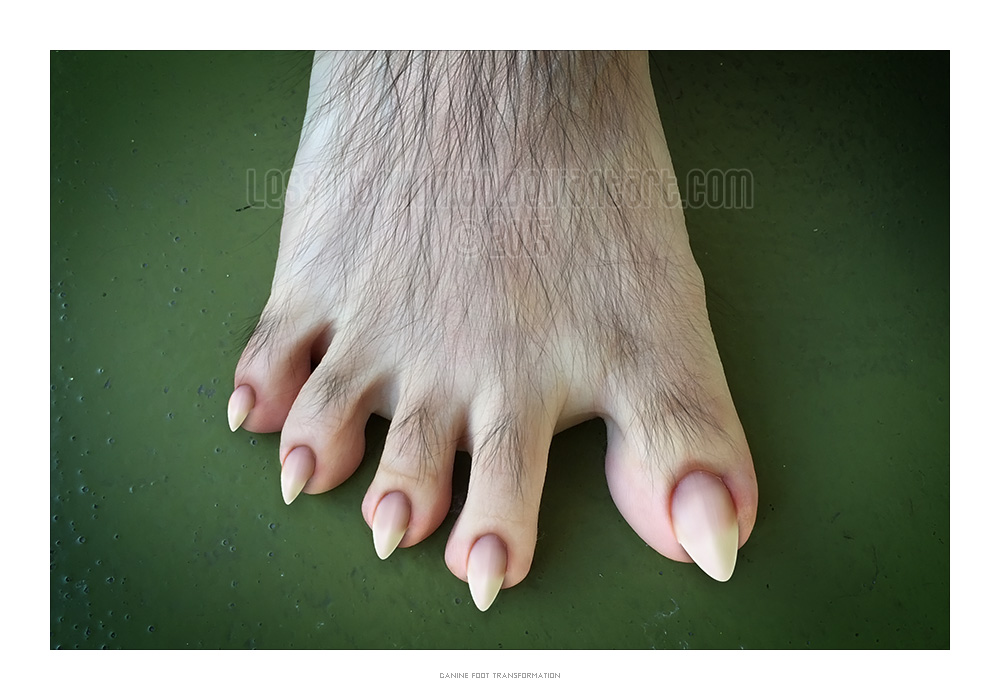 Canine Foot by lesstha...