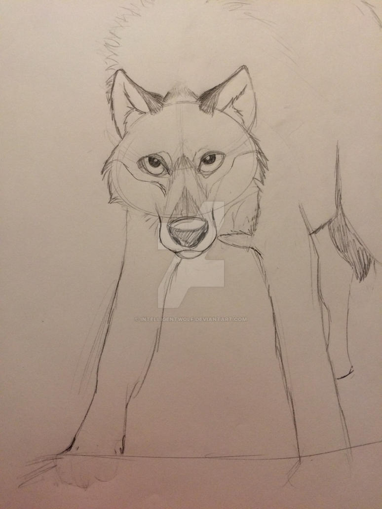 Wolf Sketch by IntelligentWolf