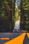 Avenue Of The Giants by LostCoastLens