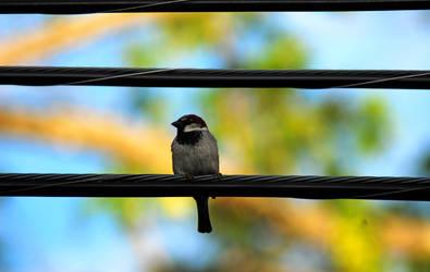 Bird on a wire by prettyflour