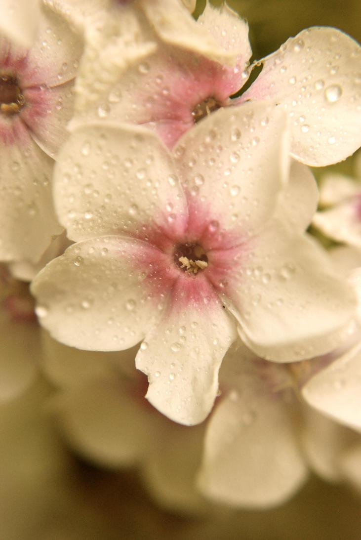 Pretty in pink by prettyflour