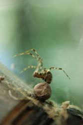 itsy bitsy spider by prettyflour