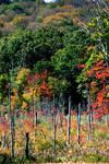 fall at the farm by prettyflour