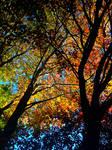 the many hues of fall by prettyflour