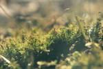 a patch of moss
