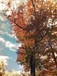Autumn in New England by prettyflour