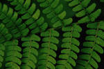leaf crossing