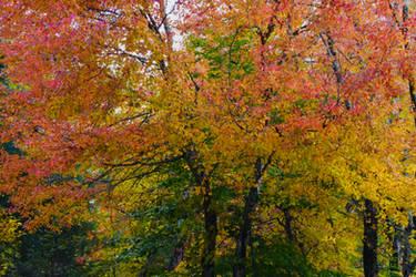 Autumn's Vibrance