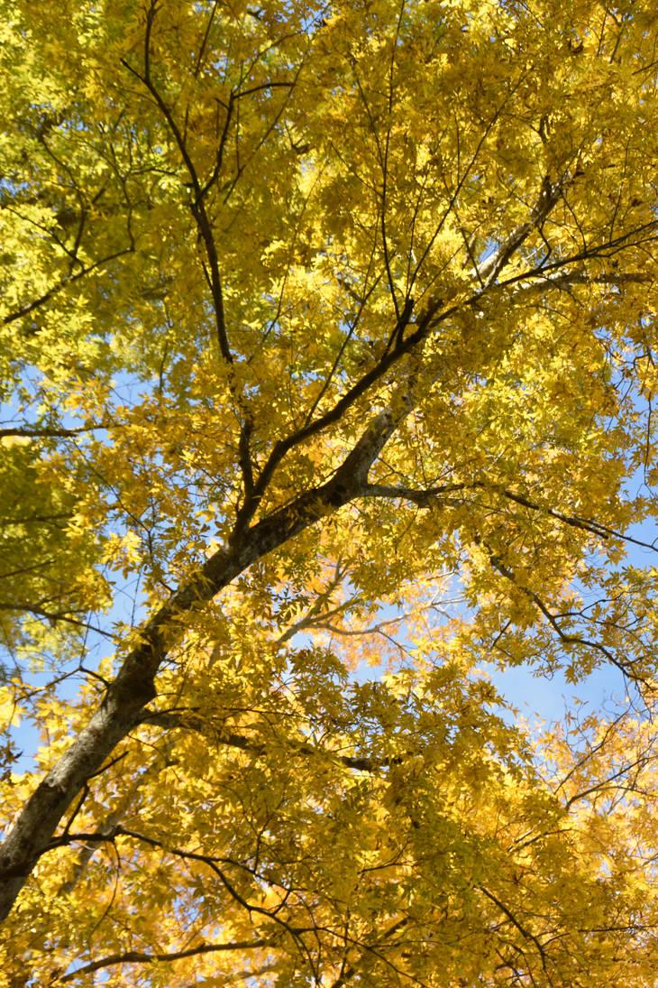Aglow in Autumn by prettyflour