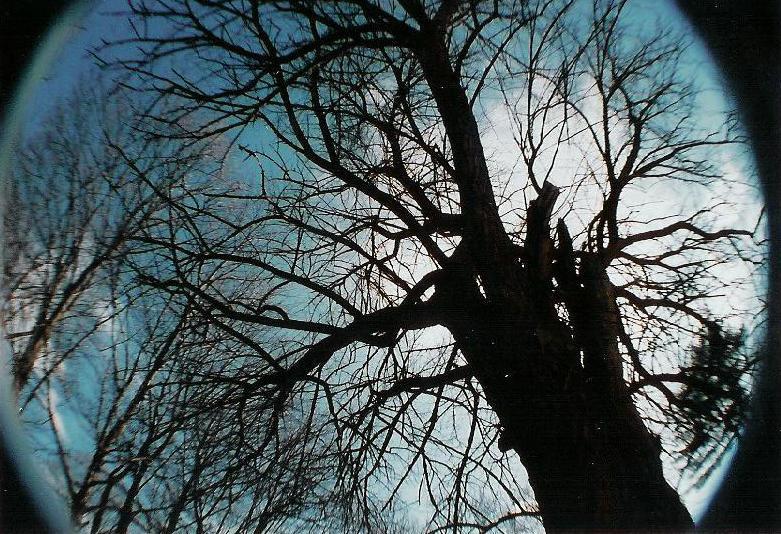 wonderous tree by prettyflour