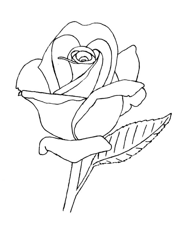 Line Drawing Of A Rose : Rose lineart by groundhog on deviantart