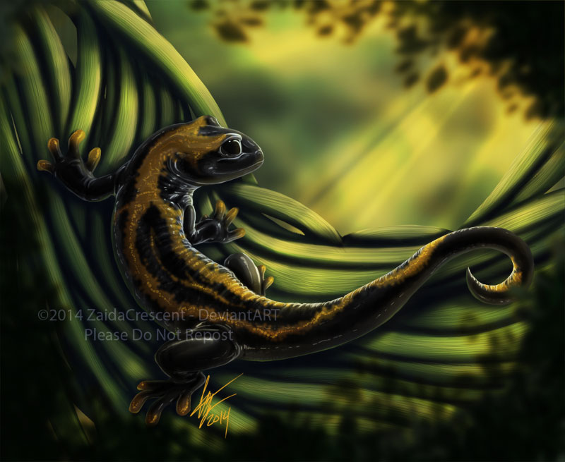 Salamander by ZaidaCrescent