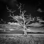 hopeless tree 2