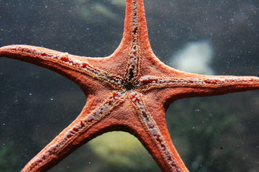 Star by oldspider26