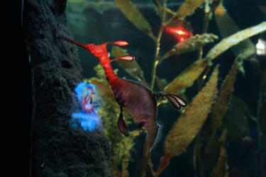 Seahorse by oldspider26