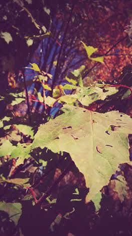 Fall by josephART15