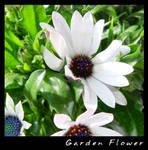 Balcony Flower