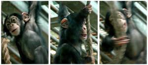 Chimpanse by bossydk