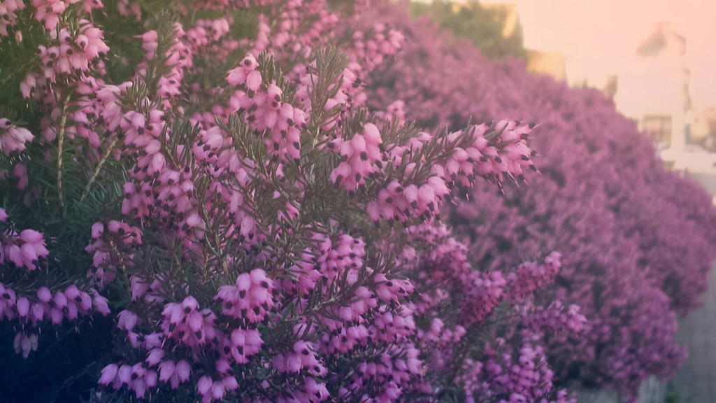 I don't know the name of these flowers by 231smarty