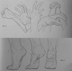Daily anatomy #6/7 by MiyoTheCreator