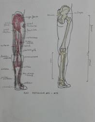 Daily anatomy #10 by MiyoTheCreator
