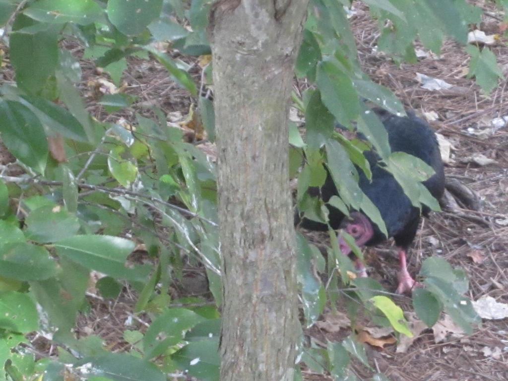 Hide and seek by ScarabsCorner