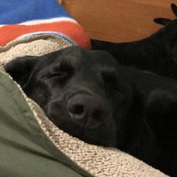 Dreaming his night away by ScarabsCorner