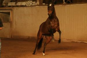 Horse Stock 2 by renegeade