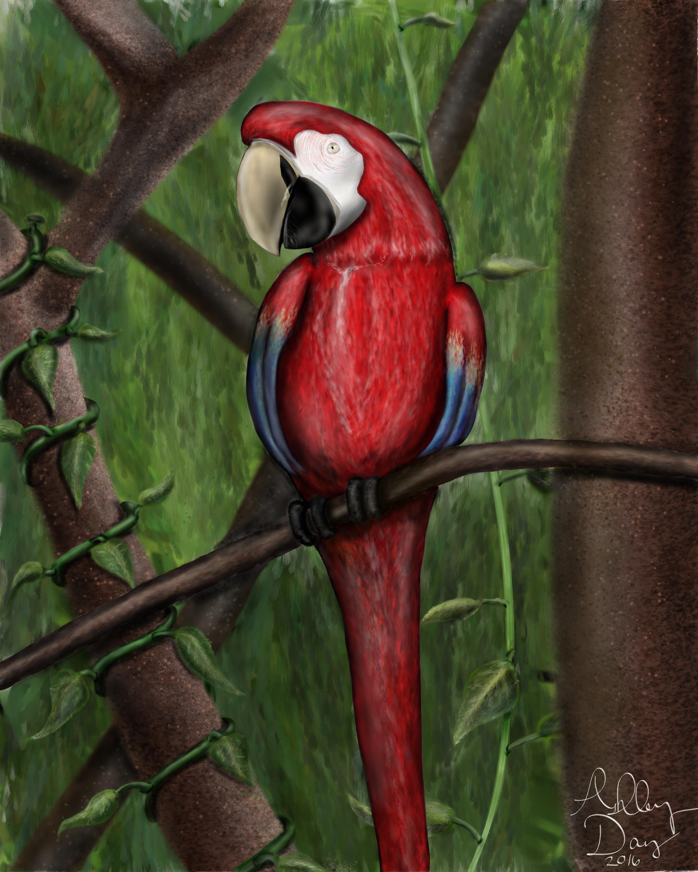 Parrot of Audubon Zoo by AshleyDay44