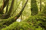 Tree-trunks-gardening-forester