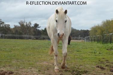 Pony [Stock] by R-eflection