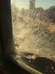 How Much For That Spider in the Window? by CAPSLOCK44