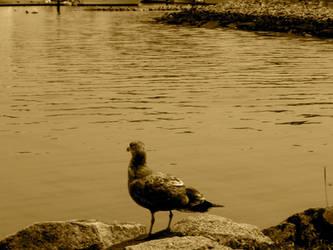 Contemplative Bird by CAPSLOCK44