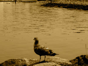 Contemplative Bird