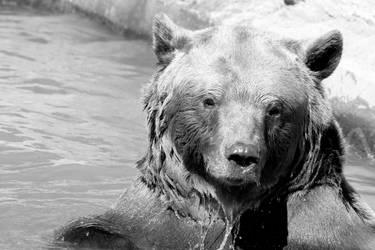 Wild swimming bear by Atimoon